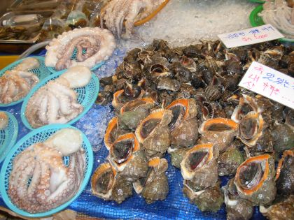 Octopus and Pretty Shells